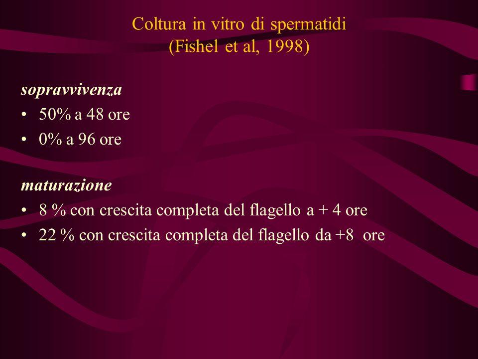 Coltura in vitro di spermatidi (Fishel et al, 1998) sopravvivenza 50% a 48 ore 0% a 96 ore maturazione 8 % con crescita completa del flagello a + 4 or