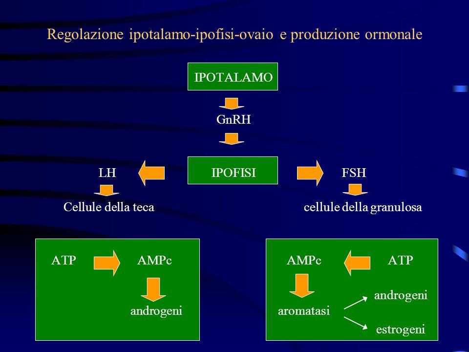 IPOTALAMO GnRH LHIPOFISIFSH Cellule della tecacellule della granulosa ATPAMPcAMPcATP androgeni androgeniaromatasi estrogeni Regolazione ipotalamo-ipof