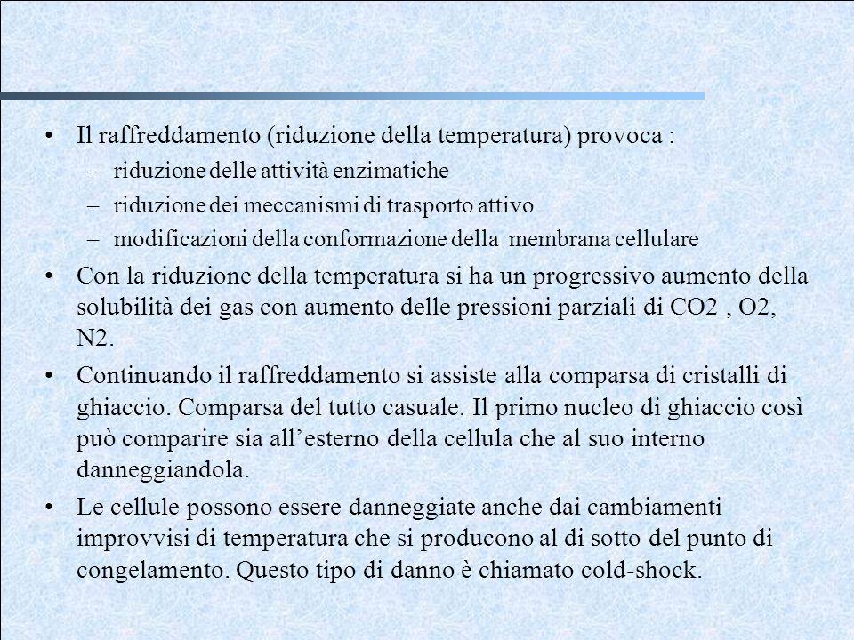 Il raffreddamento (riduzione della temperatura) provoca : –riduzione delle attività enzimatiche –riduzione dei meccanismi di trasporto attivo –modific