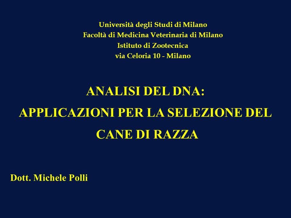 o CONTROLLO GENETICO DELLA PARENTELA o STUDIO DELLA VARIABILITA GENETICA o STUDIO DELL EREDITA PATOLOGICA E SELEZIONE PER CARATTERI MORFOLOGICI DI INTERESSE SELEZIONE DEL CANE DI RAZZA: GENETICA MOLECOLARE APPLICAZIONE DELLE TECNICHE DEL DNA ALLA SPECIE CANINA Applicazioni principali :