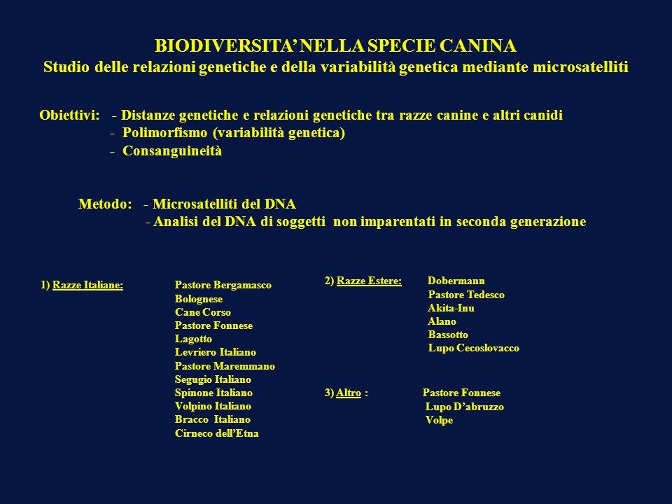 1) Razze Italiane: Pastore Bergamasco Bolognese Cane Corso Pastore Fonnese Lagotto Levriero Italiano Pastore Maremmano Segugio Italiano Spinone Italia