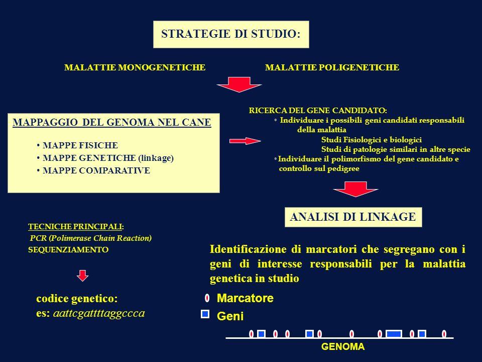STRATEGIE DI STUDIO: MALATTIE MONOGENETICHEMALATTIE POLIGENETICHE MAPPAGGIO DEL GENOMA NEL CANE MAPPE FISICHE MAPPE GENETICHE (linkage) MAPPE COMPARAT
