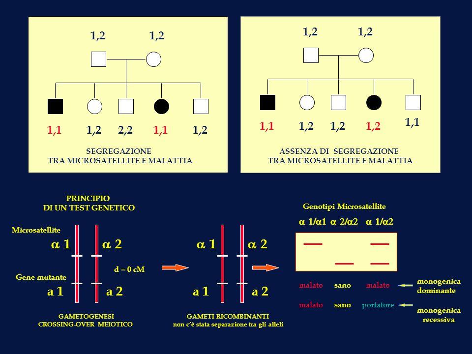 1,2 1,1 2,2 1,1 1,2 SEGREGAZIONE TRA MICROSATELLITE E MALATTIA ASSENZA DI SEGREGAZIONE TRA MICROSATELLITE E MALATTIA PRINCIPIO DI UN TEST GENETICO GAM