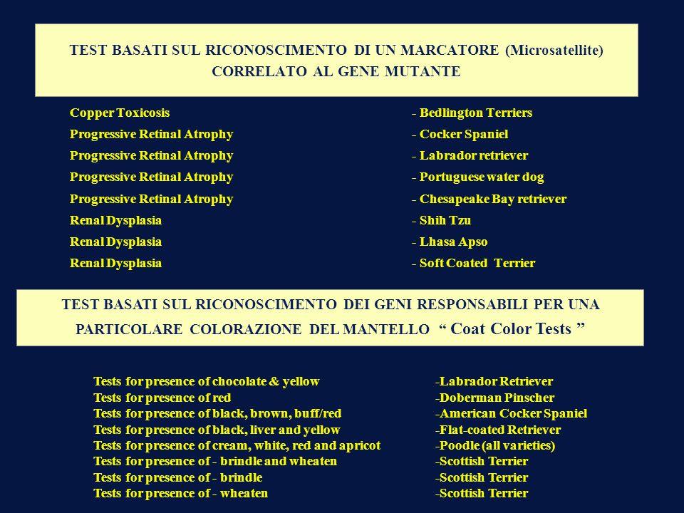 TEST BASATI SUL RICONOSCIMENTO DI UN MARCATORE (Microsatellite) CORRELATO AL GENE MUTANTE Copper Toxicosis - Bedlington Terriers Progressive Retinal A