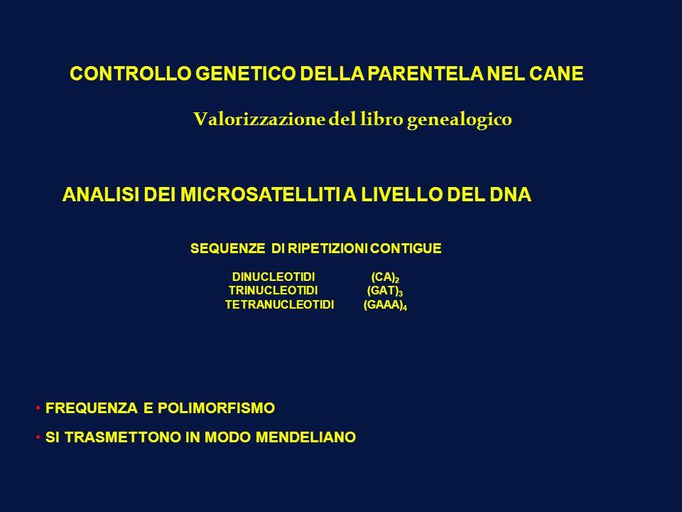CONTROLLO GENETICO DELLA PARENTELA NEL CANE ANALISI DEI MICROSATELLITI A LIVELLO DEL DNA SEQUENZE DI RIPETIZIONI CONTIGUE DINUCLEOTIDI (CA) 2 TRINUCLE
