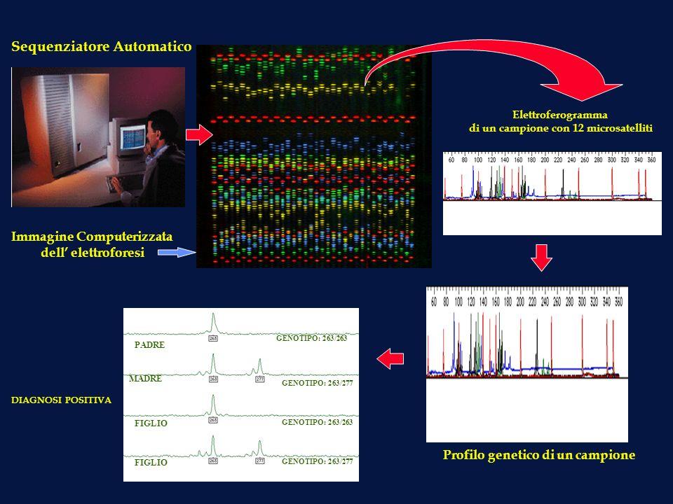 Sequenziatore Automatico Immagine Computerizzata dell elettroforesi Elettroferogramma di un campione con 12 microsatelliti PADRE MADRE FIGLIO GENOTIPO