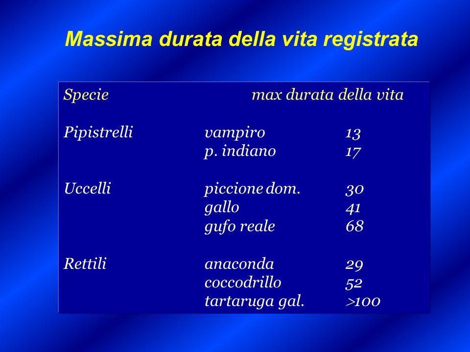 Anni vissuti in stato di disabilità in Italia Rapporto WHO sullo stato di salute nel mondo, 2000