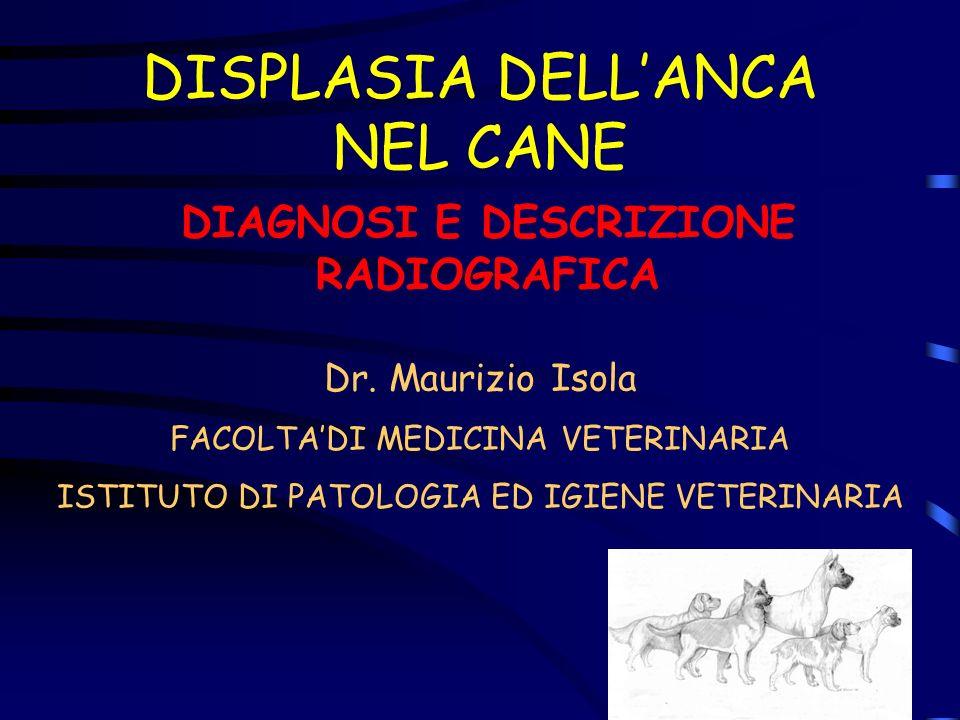 DISPLASIA DELLANCA NEL CANE DIAGNOSI E DESCRIZIONE RADIOGRAFICA Dr. Maurizio Isola FACOLTADI MEDICINA VETERINARIA ISTITUTO DI PATOLOGIA ED IGIENE VETE
