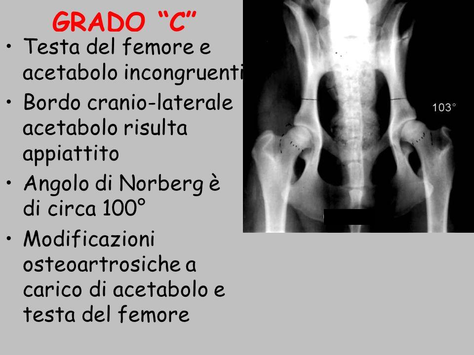 GRADO C Testa del femore e acetabolo incongruenti Bordo cranio-laterale acetabolo risulta appiattito Angolo di Norberg è di circa 100° Modificazioni o