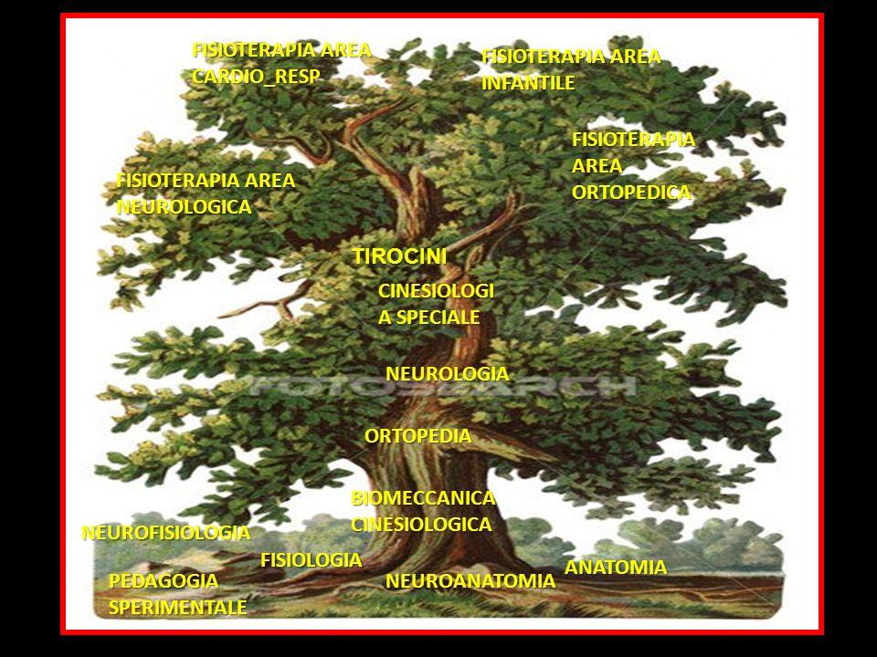 FISIOTERAPIA AREA ORTOPEDICA CINESIOLOGI A SPECIALE NEUROLOGIA ORTOPEDIA BIOMECCANICA CINESIOLOGICA ANATOMIA NEUROANATOMIA FISIOLOGIA PEDAGOGIA SPERIM