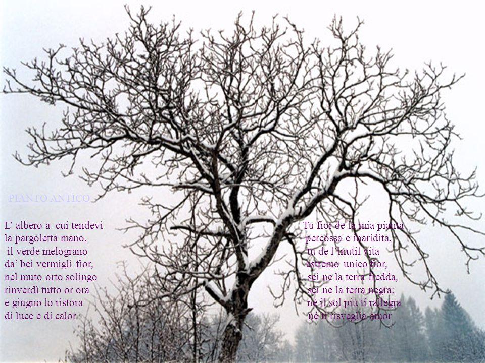 PIANTO ANTICO L albero a cui tendevi Tu fior de la mia pianta la pargoletta mano, percossa e inaridita, il verde melograno tu de linutil vita da bei vermigli fior, estremo unico fior, nel muto orto solingo sei ne la terra fredda, rinverdì tutto or ora sei ne la terra negra; e giugno lo ristora né il sol più ti rallegra di luce e di calor né ti risveglia amor