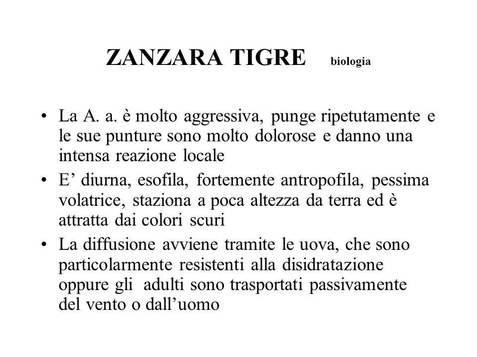 ZANZARA TIGRE biologia La A. a. è molto aggressiva, punge ripetutamente e le sue punture sono molto dolorose e danno una intensa reazione locale E diu