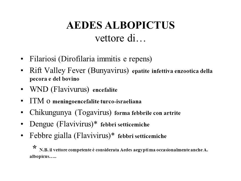AEDES ALBOPICTUS vettore di… Filariosi (Dirofilaria immitis e repens) Rift Valley Fever (Bunyavirus) epatite infettiva enzootica della pecora e del bovino WND (Flavivurus) encefalite ITM o meningoencefalite turco-israeliana Chikungunya (Togavirus) forma febbrile con artrite Dengue (Flavivirus)* febbri setticemiche Febbre gialla (Flavivirus)* febbri setticemiche * N.B.