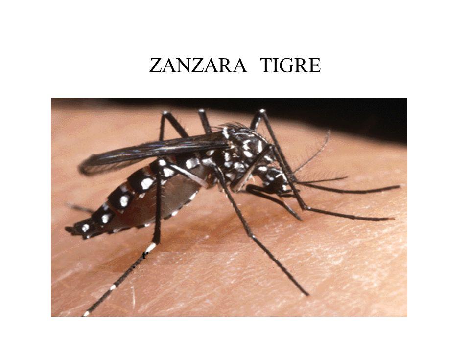 ZANZARA TIGRE dr. Marco Casi