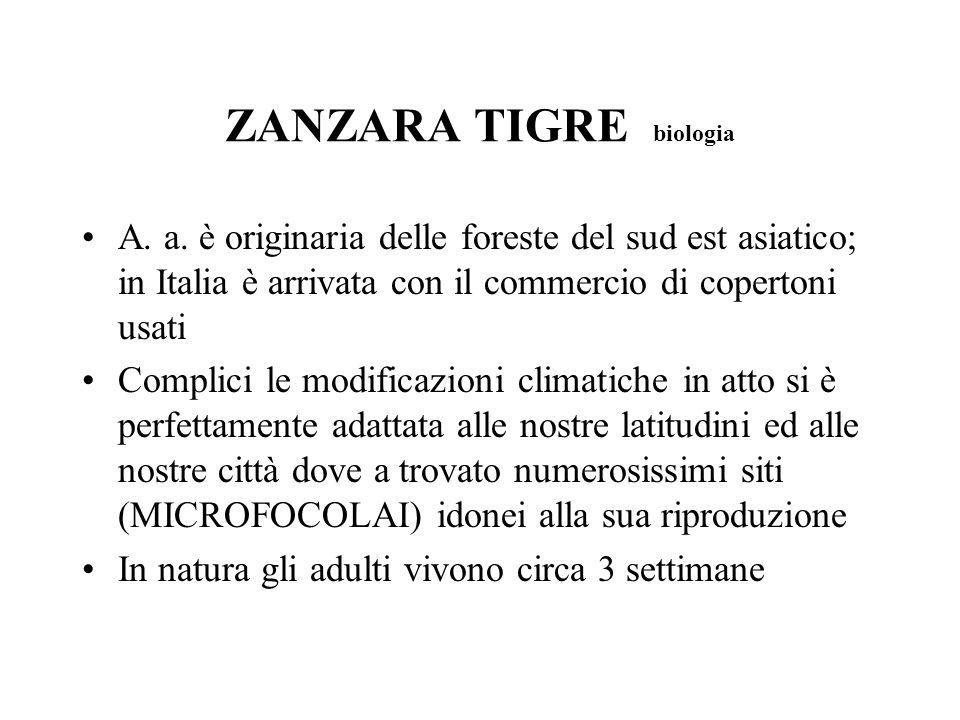 ZANZARA TIGRE biologia A. a. è originaria delle foreste del sud est asiatico; in Italia è arrivata con il commercio di copertoni usati Complici le mod