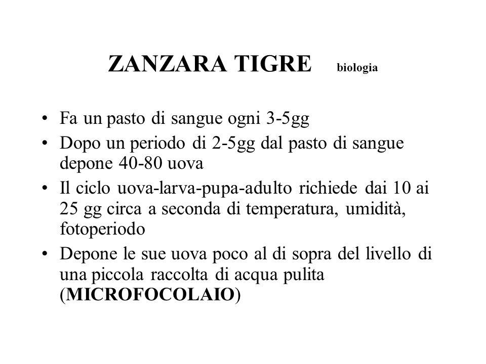 ZANZARA TIGRE biologia Fa un pasto di sangue ogni 3-5gg Dopo un periodo di 2-5gg dal pasto di sangue depone 40-80 uova Il ciclo uova-larva-pupa-adulto