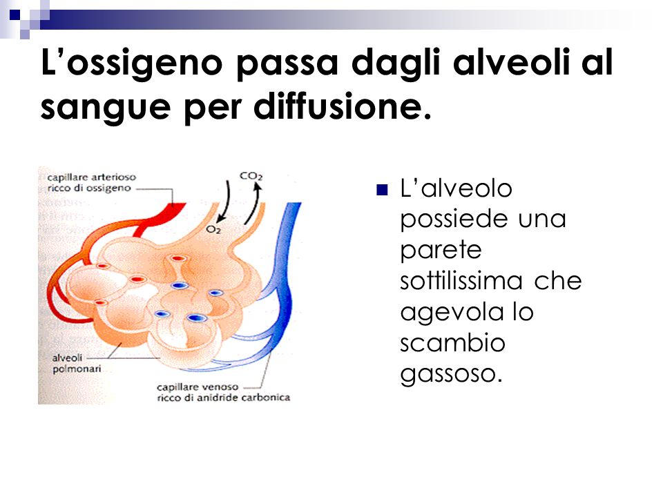 La respirazione comprende due fasi : Inspirazione: introduzione dellaria - il diaframma si contrae - laria entra nei polmoni Espirazione: espulsione d