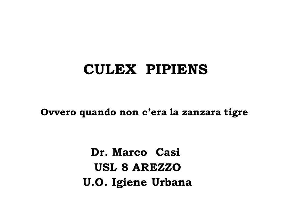 CULEX PIPIENS Ovvero quando non cera la zanzara tigre Dr. Marco Casi USL 8 AREZZO U.O. Igiene Urbana