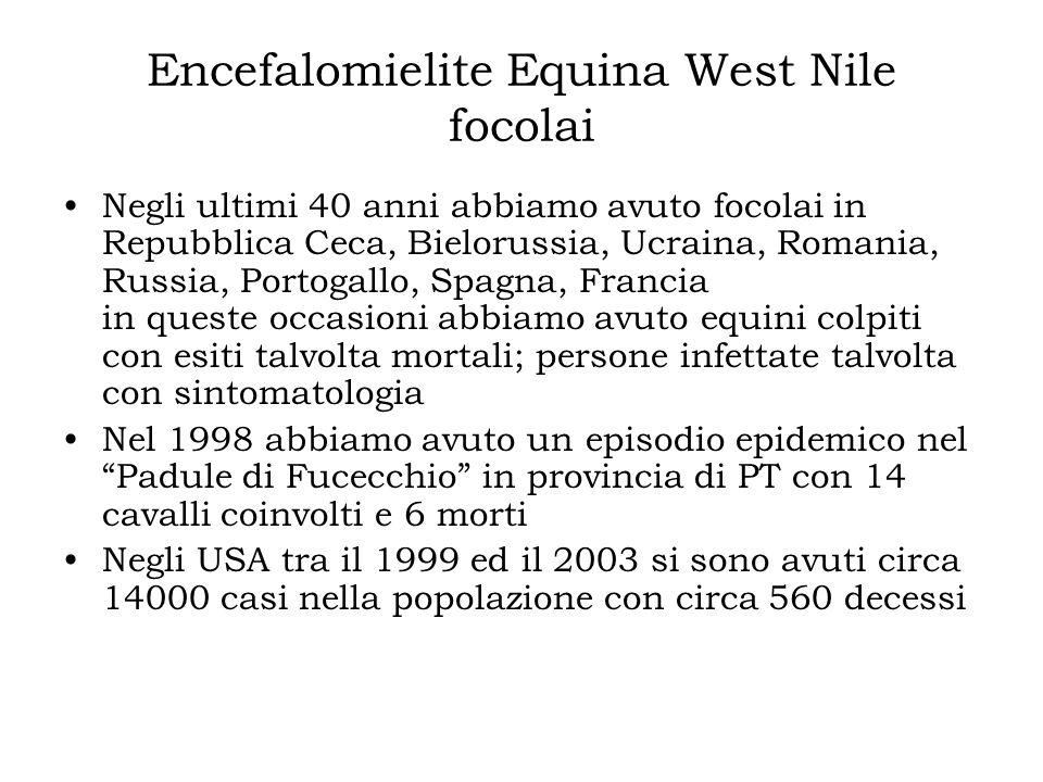 Encefalomielite Equina West Nile focolai Negli ultimi 40 anni abbiamo avuto focolai in Repubblica Ceca, Bielorussia, Ucraina, Romania, Russia, Portoga