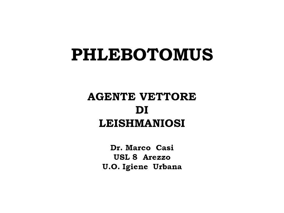 PHLEBOTOMUS AGENTE VETTORE DI LEISHMANIOSI Dr. Marco Casi USL 8 Arezzo U.O. Igiene Urbana