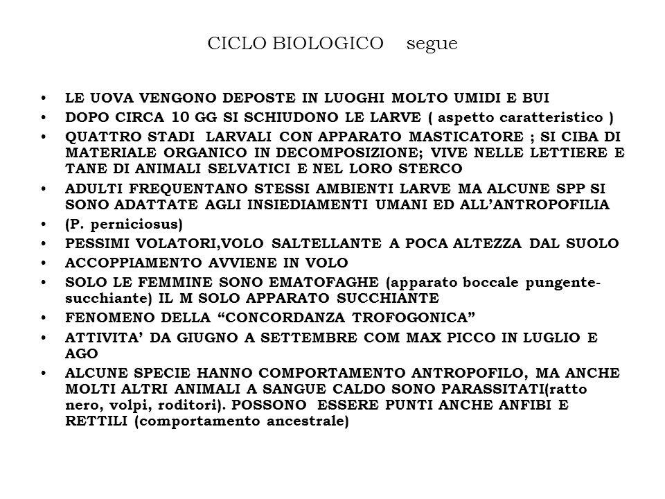 CICLO BIOLOGICO segue LE UOVA VENGONO DEPOSTE IN LUOGHI MOLTO UMIDI E BUI DOPO CIRCA 10 GG SI SCHIUDONO LE LARVE ( aspetto caratteristico ) QUATTRO ST