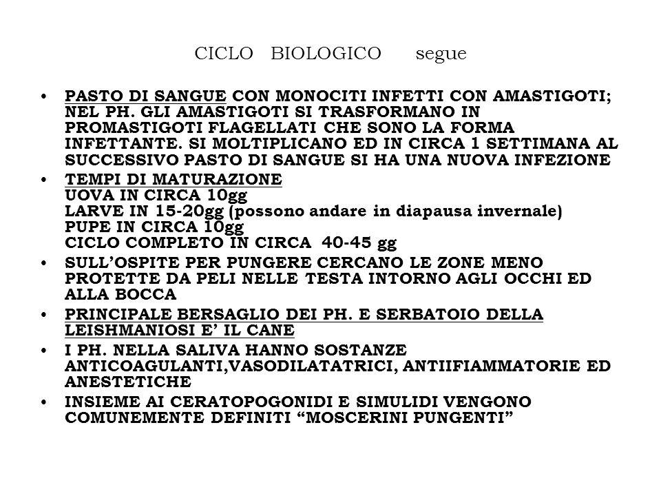 CICLO BIOLOGICO segue PASTO DI SANGUE CON MONOCITI INFETTI CON AMASTIGOTI; NEL PH. GLI AMASTIGOTI SI TRASFORMANO IN PROMASTIGOTI FLAGELLATI CHE SONO L