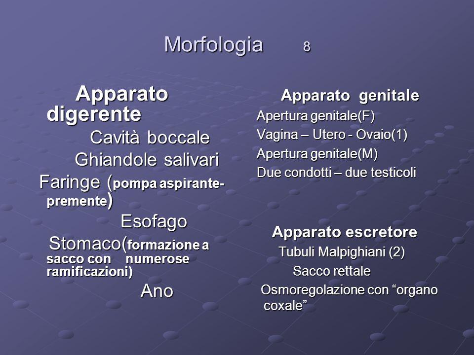 Morfologia 8 Apparato digerente Apparato digerente Cavità boccale Cavità boccale Ghiandole salivari Ghiandole salivari Faringe ( pompa aspirante- prem
