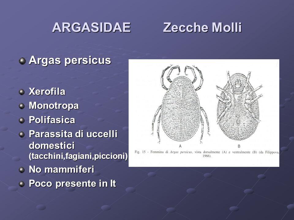 ARGASIDAE Zecche Molli Argas persicus XerofilaMonotropaPolifasica Parassita di uccelli domestici (tacchini,fagiani,piccioni) No mammiferi Poco present