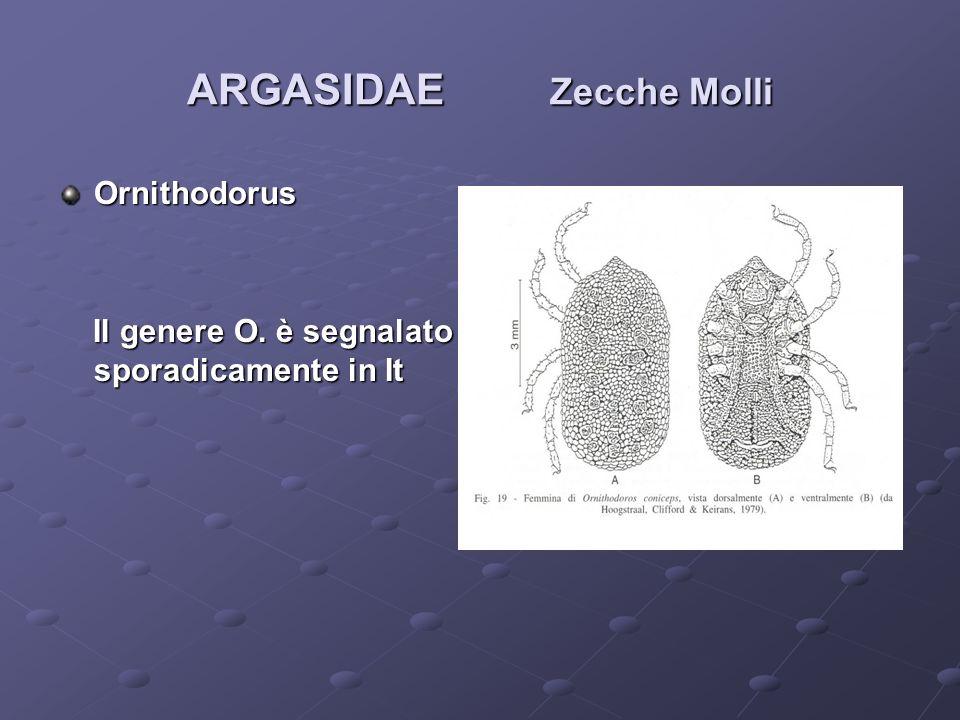 ARGASIDAE Zecche Molli Ornithodorus Il genere O. è segnalato sporadicamente in It Il genere O. è segnalato sporadicamente in It