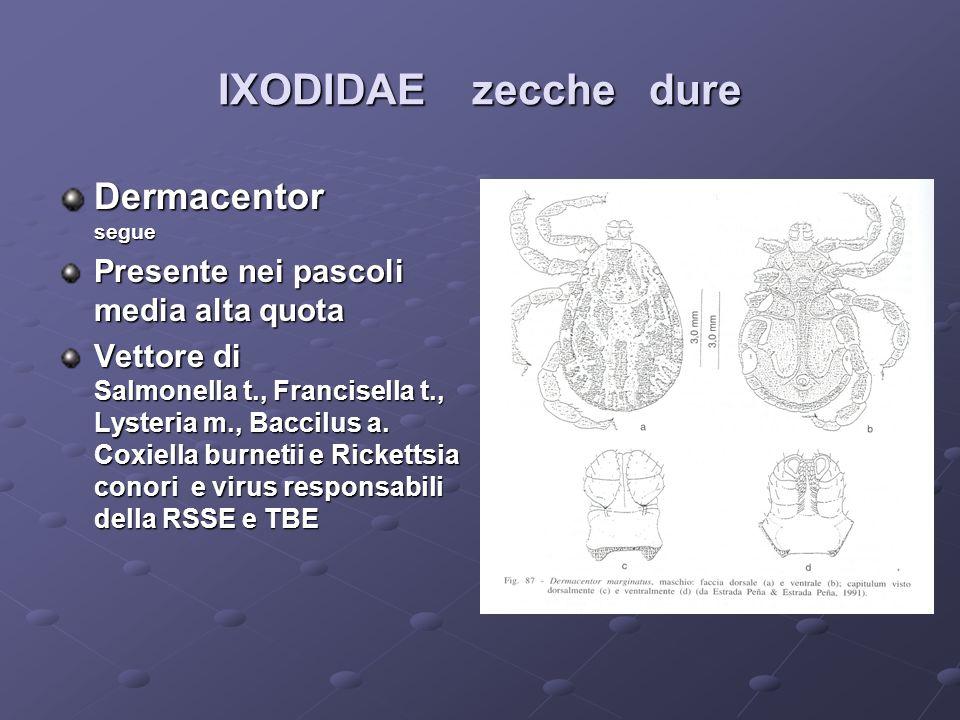 IXODIDAE zecche dure Dermacentor segue Presente nei pascoli media alta quota Vettore di Salmonella t., Francisella t., Lysteria m., Baccilus a. Coxiel