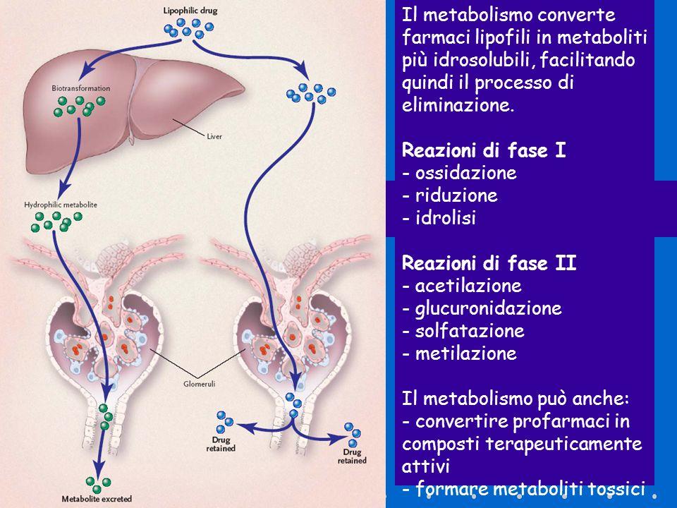 Il metabolismo converte farmaci lipofili in metaboliti più idrosolubili, facilitando quindi il processo di eliminazione. Reazioni di fase I - ossidazi