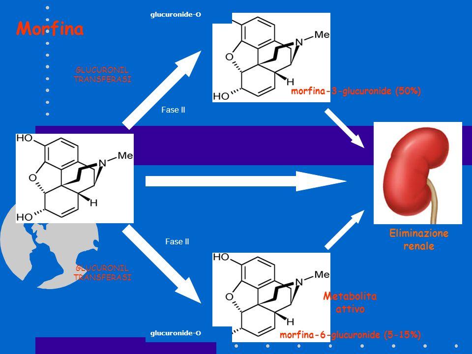 morfina glucuronide-O morfina-3-glucuronide (50%) morfina-6-glucuronide (5-15%) Metabolita attivo Eliminazione renale GLUCURONIL TRANSFERASI Fase II M