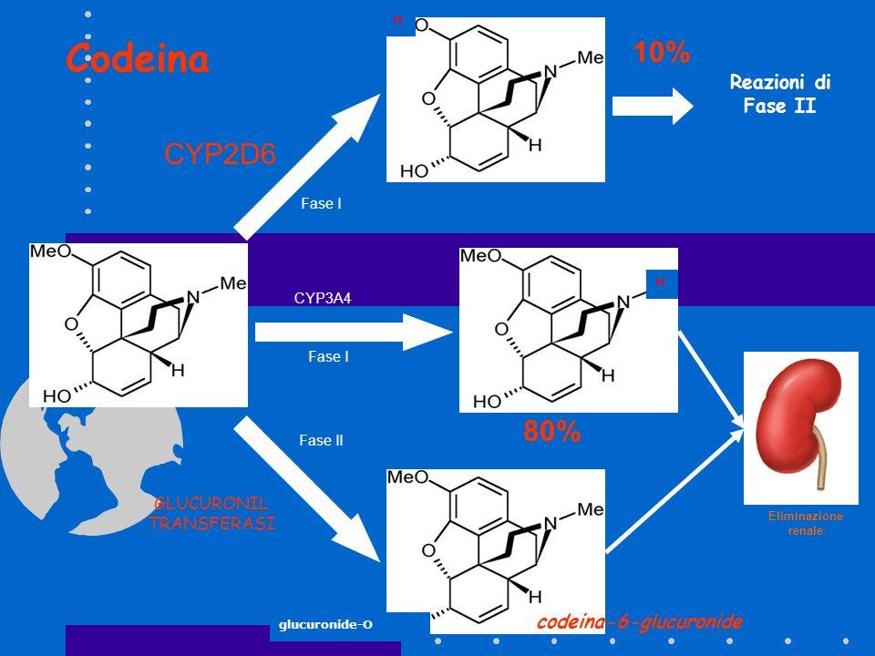morfina codeina glucuronide-O H norcodeina codeina-6-glucuronide H CYP3A4 CYP2D6 10% 80% Eliminazione renale Fase I GLUCURONIL TRANSFERASI Fase II Rea