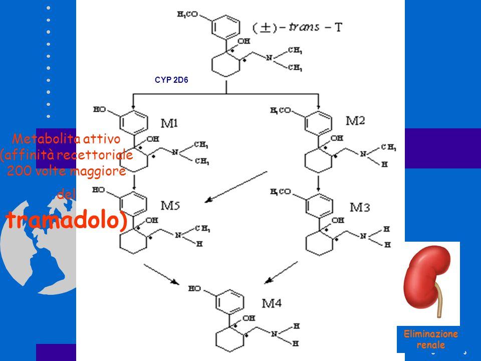 Metabolita attivo (affinità recettoriale 200 volte maggiore del tramadolo ) TRAMADOLO Eliminazione renale