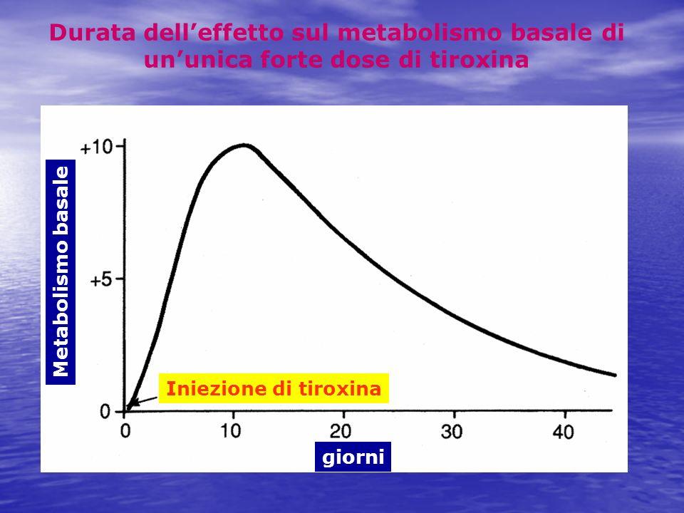 Metabolismo basale giorni Iniezione di tiroxina Durata delleffetto sul metabolismo basale di ununica forte dose di tiroxina