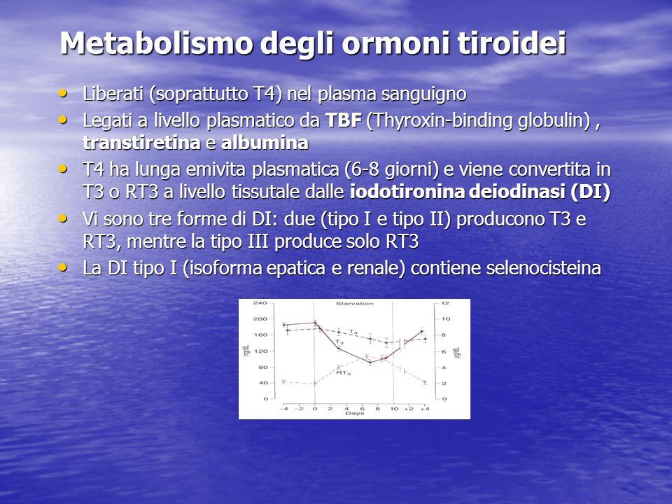 Metabolismo degli ormoni tiroidei Liberati (soprattutto T4) nel plasma sanguigno Liberati (soprattutto T4) nel plasma sanguigno Legati a livello plasm