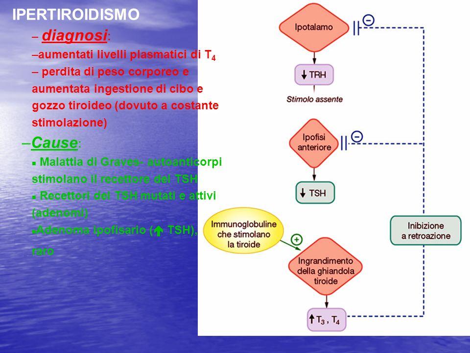 IPERTIROIDISMO – diagnosi : –aumentati livelli plasmatici di T 4 – perdita di peso corporeo e aumentata ingestione di cibo e gozzo tiroideo (dovuto a