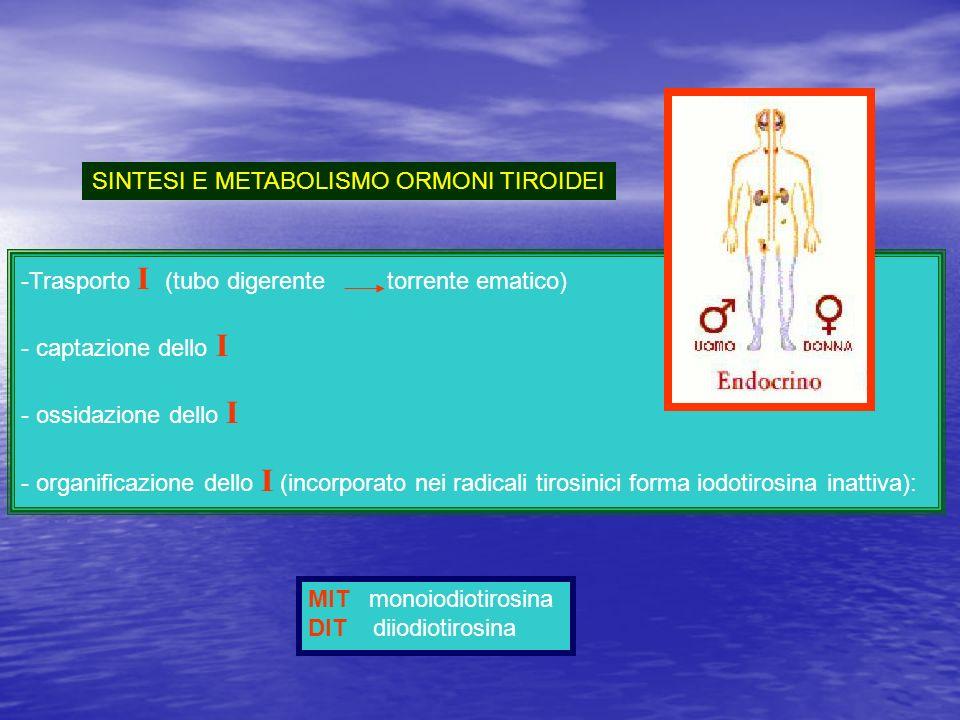SINTESI E METABOLISMO ORMONI TIROIDEI -Trasporto I (tubo digerente torrente ematico) - captazione dello I - ossidazione dello I - organificazione dell