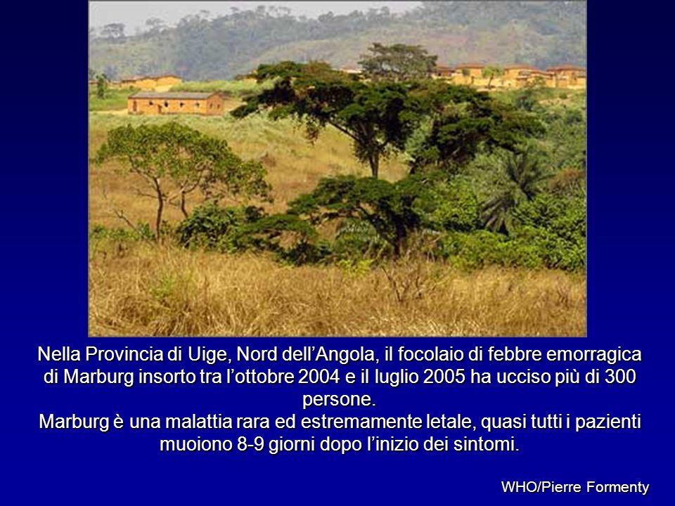 Nella Provincia di Uige, Nord dellAngola, il focolaio di febbre emorragica di Marburg insorto tra lottobre 2004 e il luglio 2005 ha ucciso più di 300