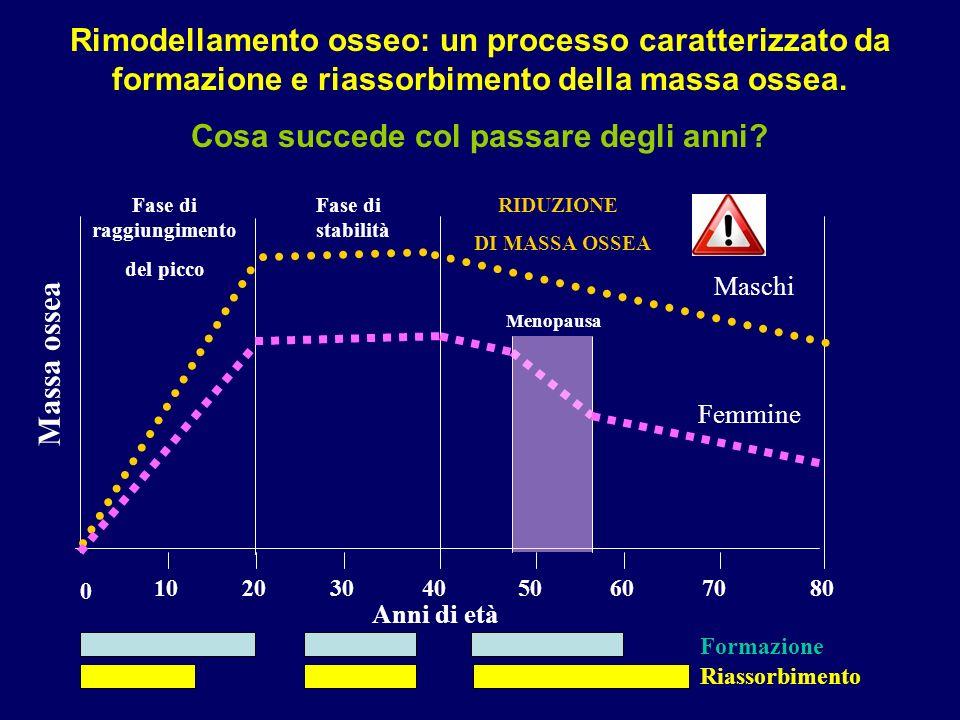 0 2010608050304070 Fase di raggiungimento del picco Fase di stabilità RIDUZIONE DI MASSA OSSEA Menopausa Massa ossea Anni di età Rimodellamento osseo: