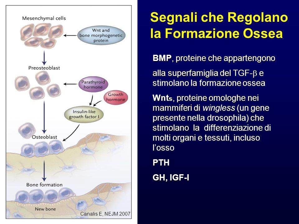 Segnali che Regolano la Formazione Ossea BMP, proteine che appartengono alla superfamiglia del alla superfamiglia del TGF- e stimolano la formazione o