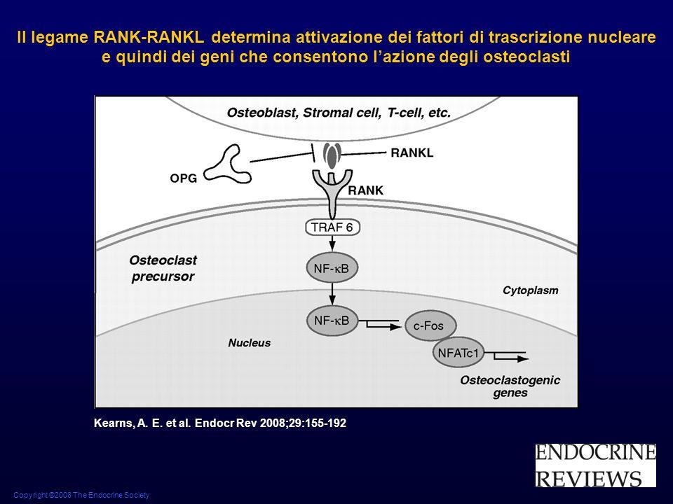 Copyright ©2008 The Endocrine Society Kearns, A. E. et al. Endocr Rev 2008;29:155-192 Il legame RANK-RANKL determina attivazione dei fattori di trascr