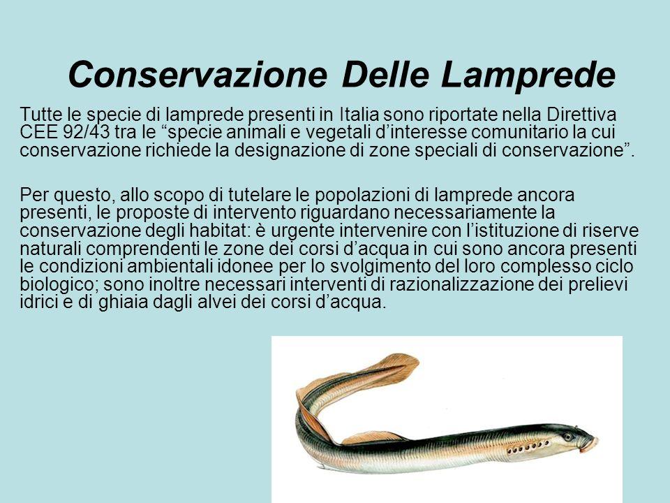 Conservazione Delle Lamprede Tutte le specie di lamprede presenti in Italia sono riportate nella Direttiva CEE 92/43 tra le specie animali e vegetali