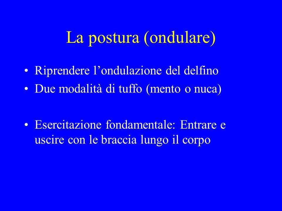 La postura (ondulare) Riprendere londulazione del delfino Due modalità di tuffo (mento o nuca) Esercitazione fondamentale: Entrare e uscire con le bra