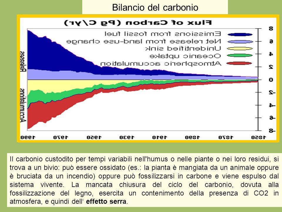 Il carbonio custodito per tempi variabili nell'humus o nelle piante o nei loro residui, si trova a un bivio: può essere ossidato (es.: la pianta è man