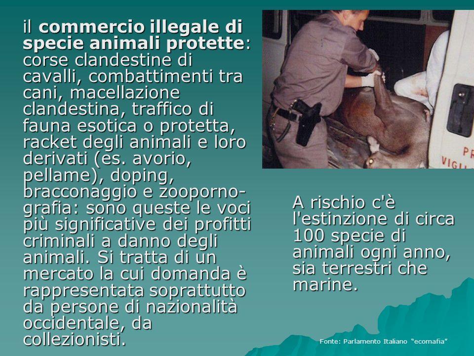 il commercio illegale di specie animali protette: corse clandestine di cavalli, combattimenti tra cani, macellazione clandestina, traffico di fauna es