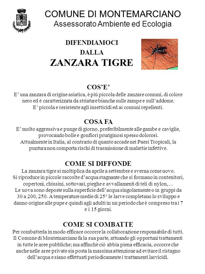 DIFENDIAMOCI DALLA ZANZARA TIGRE COSE E una zanzara di origine asiatica, è più piccola delle zanzare comuni, di colore nero ed è caratterizzata da striature bianche sulle zampe e sulladdome.