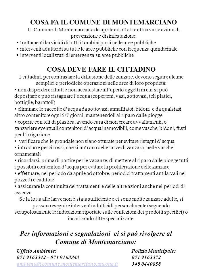 COSA FA IL COMUNE DI MONTEMARCIANO Il Comune di Montemarciano da aprile ad ottobre attua varie azioni di prevenzione e disinfestazione: trattamenti la