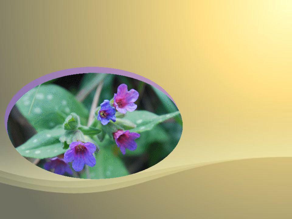 Nel ventre tuo si raccese lamore per lo cui caldo nelleterna pace così è germinato questo fiore.