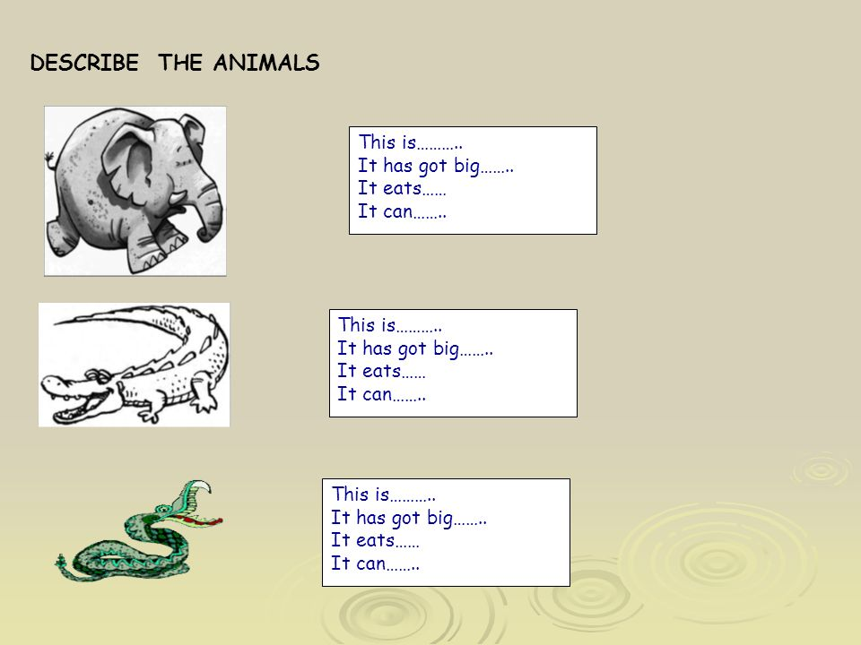 DESCRIBE THE ANIMALS This is……….. It has got big…….. It eats…… It can…….. This is……….. It has got big…….. It eats…… It can…….. This is……….. It has got